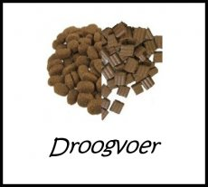 Droogvoeding - Kat
